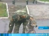 Пермь-родина волкособа.